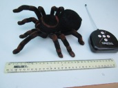 Sally Ann The Spider! (2)