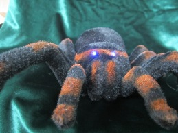 Sally Ann The Spider! (3)