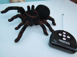 Sally Ann The Spider!